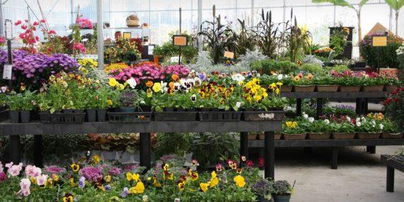 Thợ trồng hoa